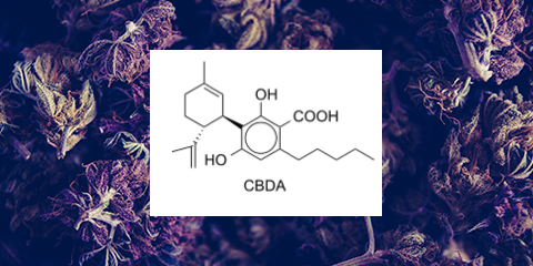 CBD vs CBDa