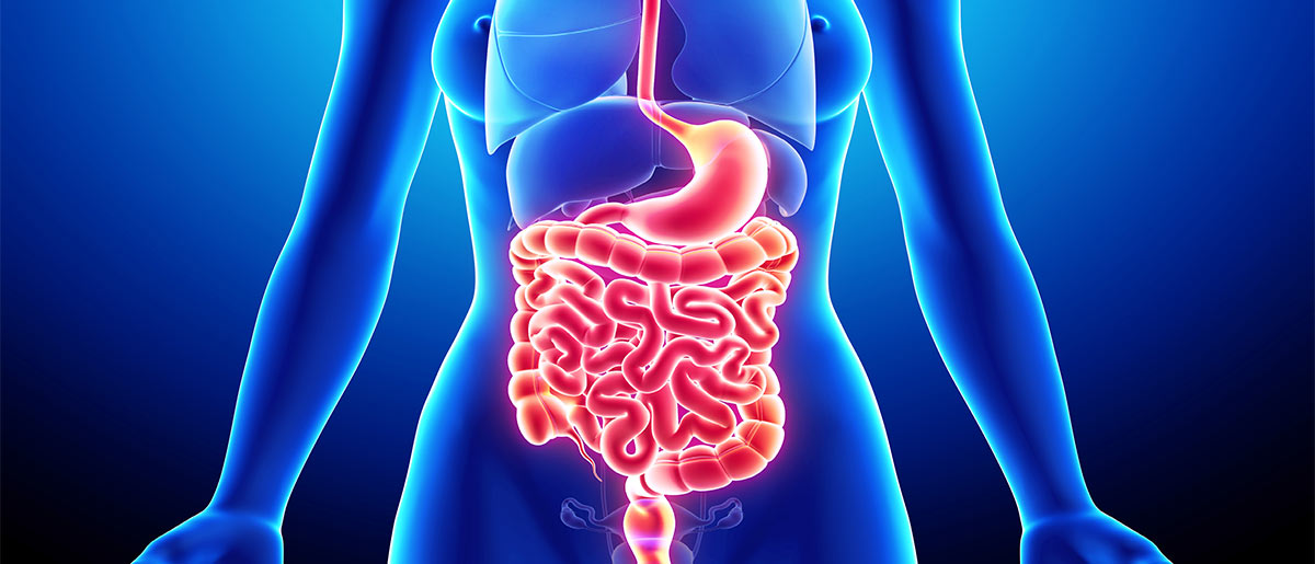 How CBD Helps Your Digestive System