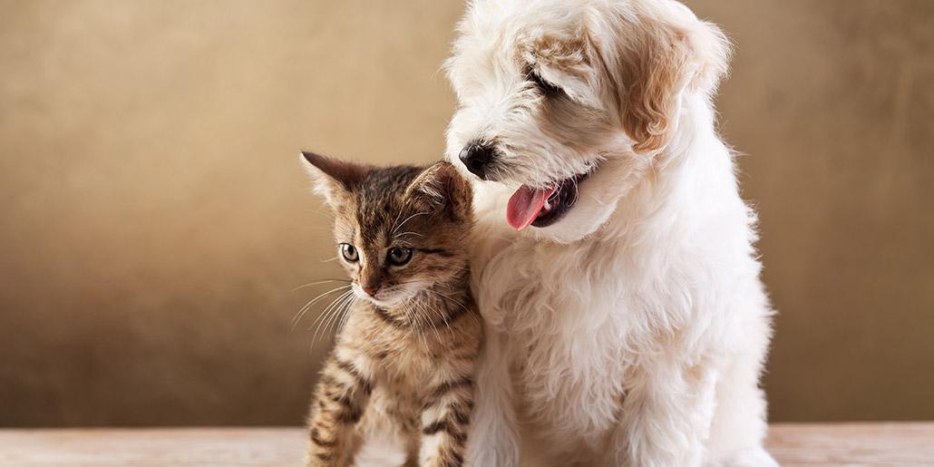 CBD & Pets