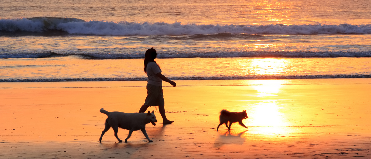 The woman walks two dogs on a sunset